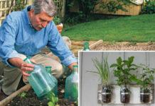 6 популярных садово-огородных уловок, которые не работают