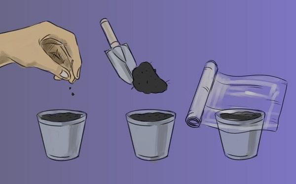 8 правил выращивания базилика в горшках: секреты огородника