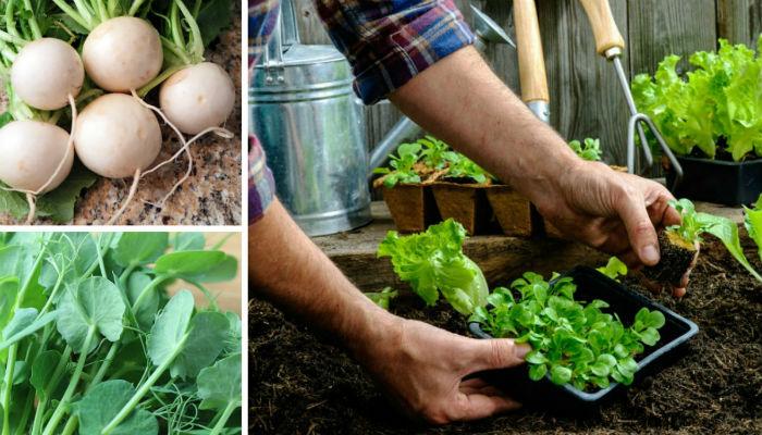 9 быстрорастущих растений для весеннего огорода