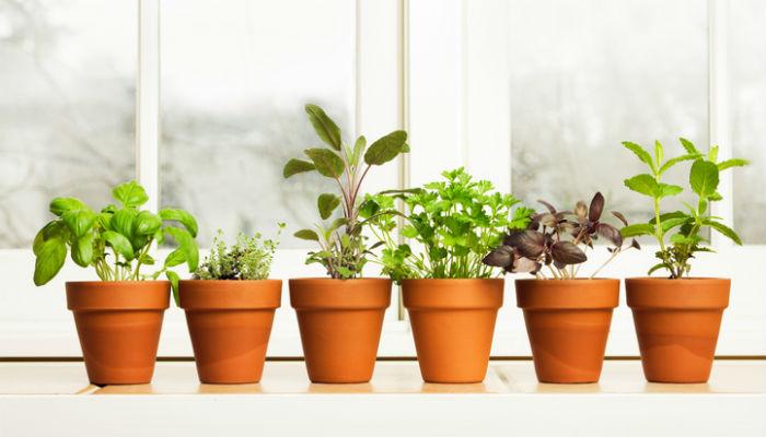 Как вырастить рассаду на подоконнике: 5 необычных способов выращивания рассады