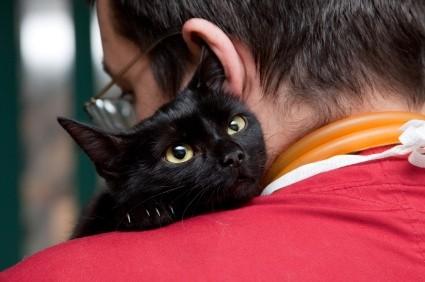 Лишай у кошек: симптомы, как лечить