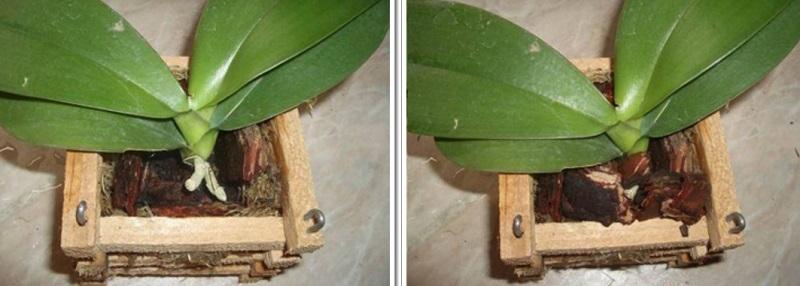 Пересадите орхидею в корзинку — пышное цветение гарантировано