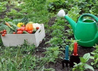 Подкормки для огорода