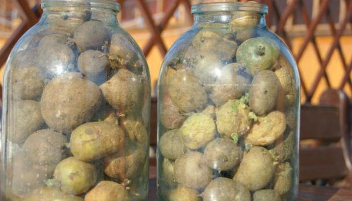 Сажаем картофель по-новому - секреты опытного садовода