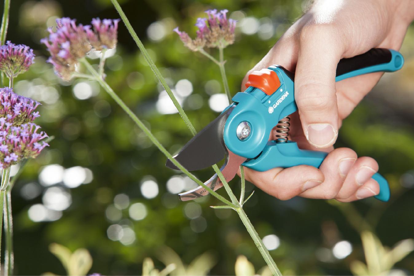 Секатор, сучкорез или садовая пила – что выбрать для ухода за садом