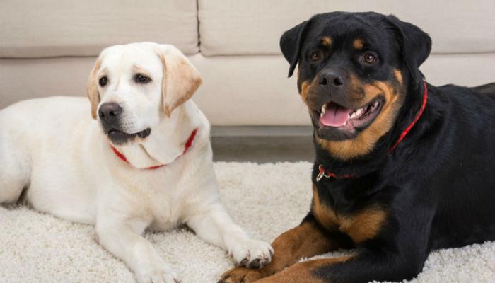 Стоит ли заводить собаку? 5 причин сделать это!