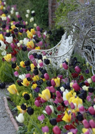 Умелые садоводы поделились завораживающими идеями весенних клумб. Красота и изысканность!