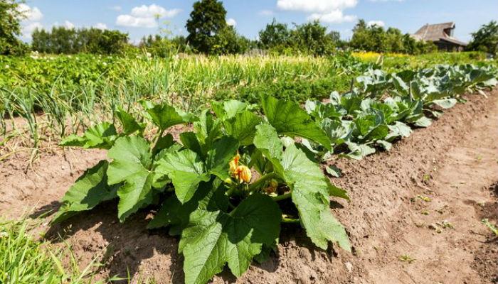 Выращивание овощей по Джону Джевонсу - небывалый урожай