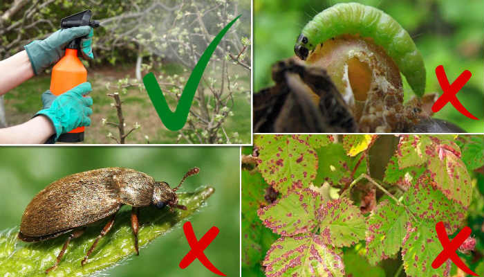 Чем обработать ягодные кусты против болезней и вредителей ранней весной