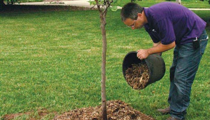 Когда и чем подкормить плодовый сад