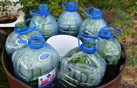 Огурцы в бутылках