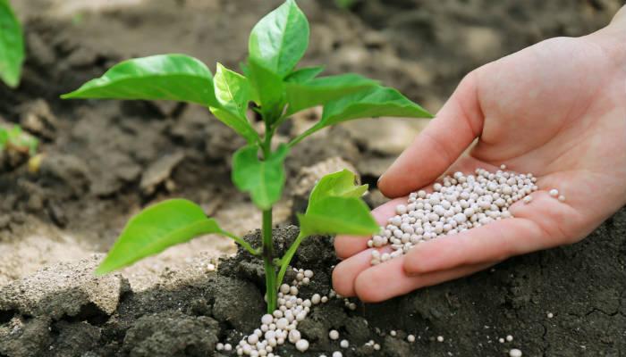 Первая подкормка растений весной