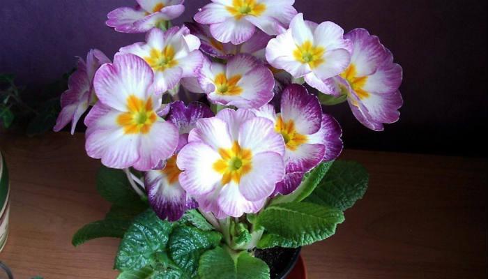 """Подкормки для цветов, чтобы росли как """"на дрожжах"""""""