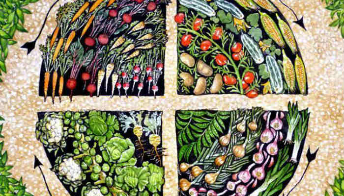 Таблица посадок и севооборот огородных растений