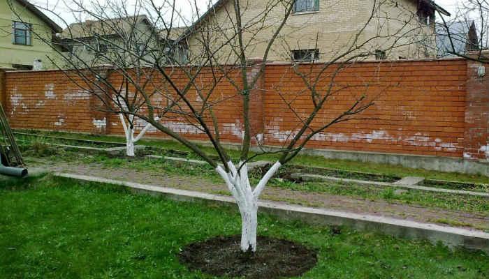 Весенняя подкормка плодовых деревьев и ягодных кустарников