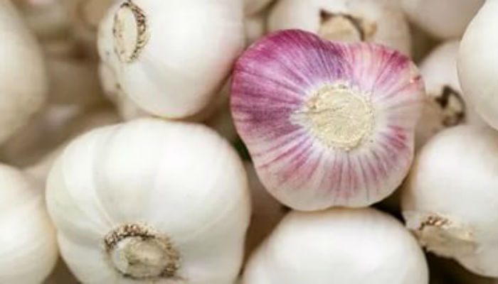 Выращиваем крупный чеснок на подоконнике! Секреты идеальной грядки и богатого урожая на вашем балконе!