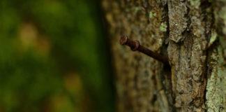 Опытные садоводы знают, зачем в саду нужно держать банку с ржавыми гвоздями