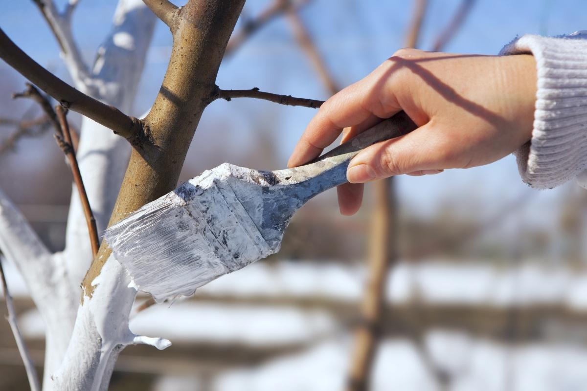 Андрей Туманов о том, как привести  в порядок сад-огород после нестандартной зимы