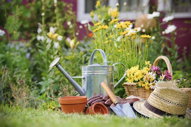 Посадите в саду таблетки аспирина