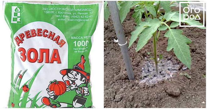 Народные подкормки для рассады томатов 289