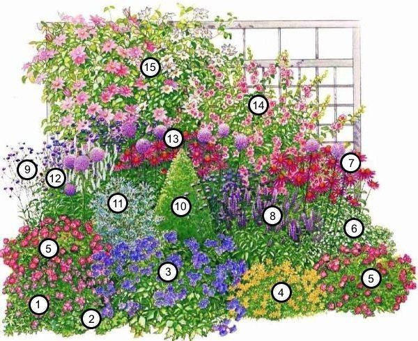 Невысокие кустарники цветущие все лето