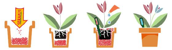 Как сажать комнатные цветы в горшок 195