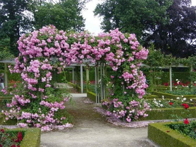 Как сделать двор в частном доме