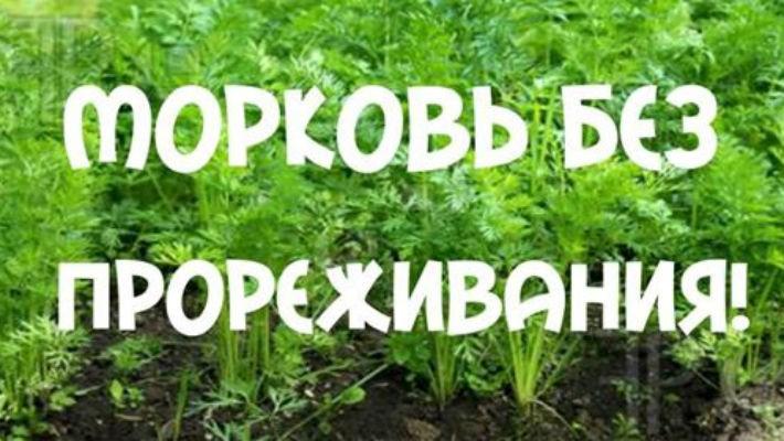 Как садят морковку