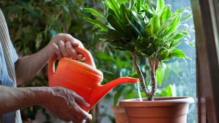 Как правильно поливать комнатные цветы зимой?