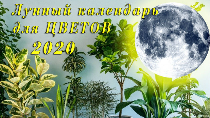 Лунный календарь черенкования комнатных растений