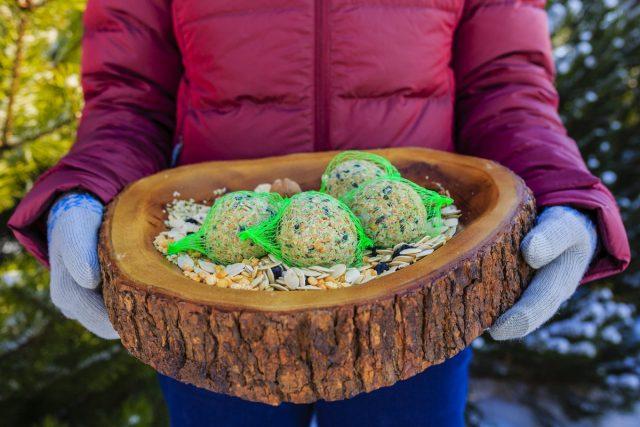 Чем можно и нельзя кормить птиц зимой?