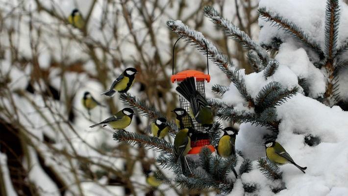 Еда для птиц зимой