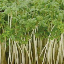 Микрозелень «Кресс-салат»